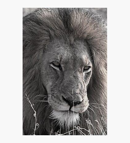 Lion Man - Photographic Nature Print Photographic Print