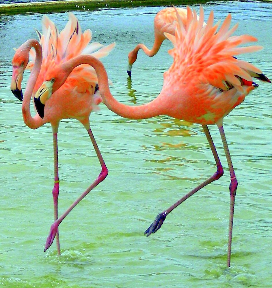 Funky Flamingo Dance ... by Danceintherain