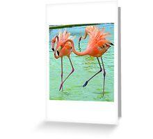 Funky Flamingo Dance ... Greeting Card
