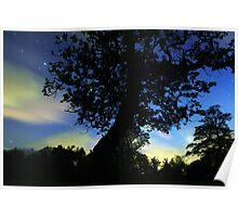 Cloudy stars and trees Poster