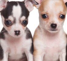 Four cute chihuahua puppy Sticker