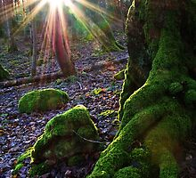 Forest Roots by Panalot