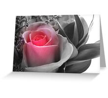 A Touch Of Pink... Greeting Card