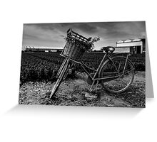 Bicycle At The Tulip Farm Netherlands Greeting Card