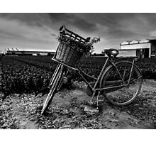 Bicycle At The Tulip Farm Netherlands Photographic Print