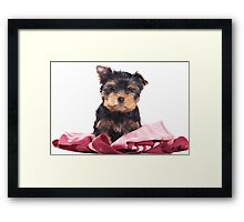 Puppy York Framed Print