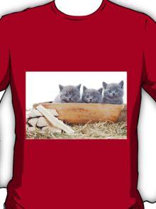 Three gray kitten T-Shirt