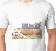Three gray kitten Unisex T-Shirt