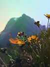 Glacier mountain flowers by schizomania