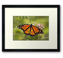 Monarch Beauty Framed Print