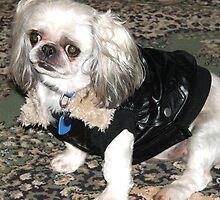 The Rocker Dog by aldemore