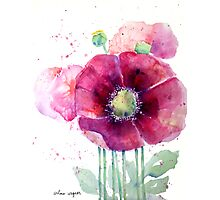 Pink Poppies Photographic Print