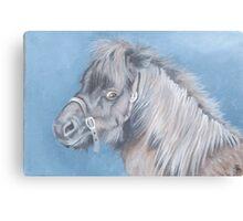 Little Shetland Canvas Print