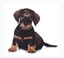 Cute Puppy dachshund Baby Tee