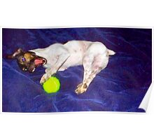 Jack Russell Terrier On Planet Blue Attack Of Orb Poster