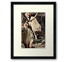 CANIS LUPUS - The Hunt Framed Print