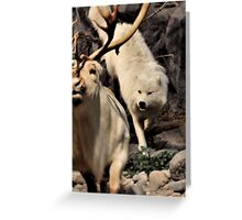 CANIS LUPUS - The Hunt Greeting Card