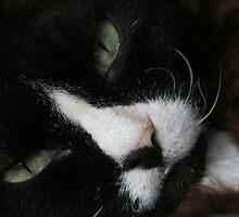 Diablo wants to sleep by Joy Watson