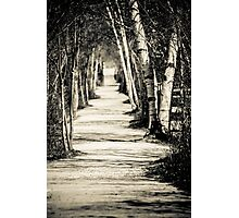 path under the trees Photographic Print