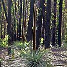 Regeneration at Chum Creek by Julie Bird