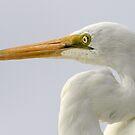 Egret by Jon Staniland