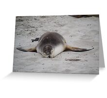 Austraian fur seal Greeting Card