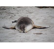 Austraian fur seal Photographic Print