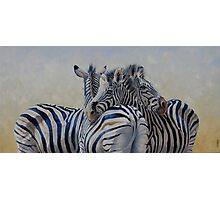360 Degree Zebras Photographic Print