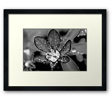 Lupin Diamond Framed Print