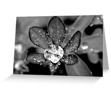 Lupin Diamond Greeting Card