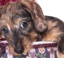 Cute Puppy dachshund Sticker