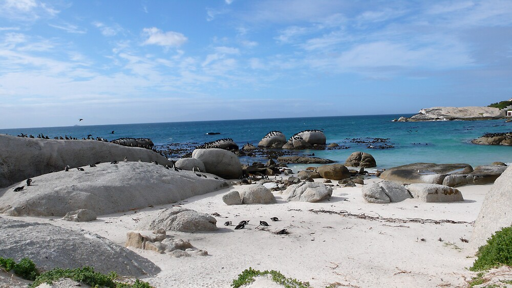 Penguin colony at cape point, Cape Town, South Africa by benstrong