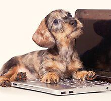 Cute Funny dachshund puppy by utekhina