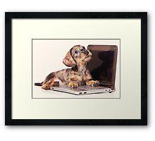 Cute Funny dachshund puppy Framed Print