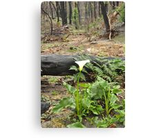 Lone Lily Canvas Print