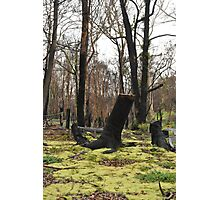 Moss regenerating six months on Photographic Print