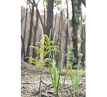 Baby Tree ferns  Photographic Print