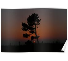 Pine at Sunset Poster