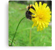 Hands up bumblebee Canvas Print