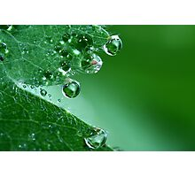 Emerald Drops Photographic Print