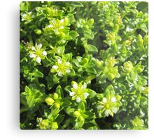 Small flowers in the forest Metal Print