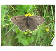 Brown butterly Poster