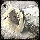 Sunflower by Shelly Harris