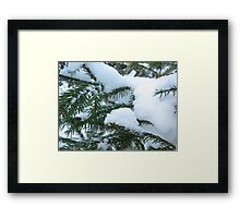 snowcapped spruce Framed Print