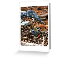 Did You Hear That....? Greeting Card
