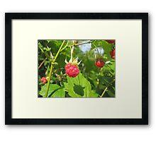 Tasty Raspberries Framed Print