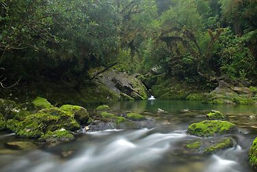 Crystal pool at the Riwaka Resurgence by Paul Mercer