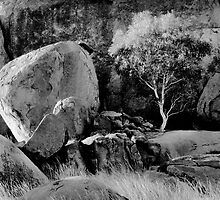 Tree and rocks by amante