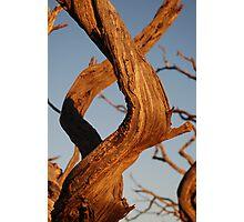 Desert Helix Photographic Print