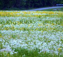 Summer Meadows .....living in the country has benefits!! by Ruth Lambert